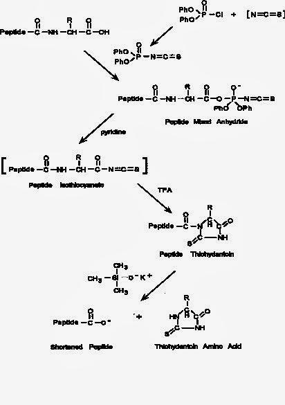 胺基酸定序(amino acid sequencing) - 小小整理網站 Smallcollation