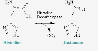 組織胺(Histamine) - 小小整理網站 Smallcollation