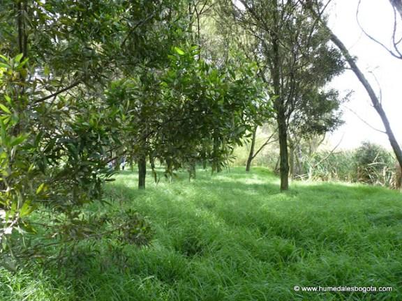 Bosque del Humedal de Techo