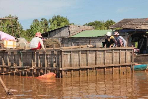 crocodile farms cambodia