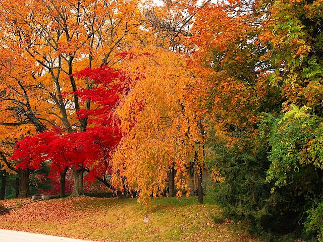 autumn trees in philadelphia