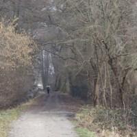 Bois de Lutterbach à VTT