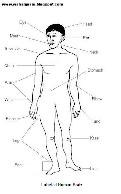 VISHAL GOSAI: Anatomy of Human body