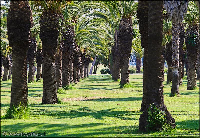 Тель Авив, парк а-Яркон   Tel Aviv, park ha-Yarkon   תל אביב פארק הירקון