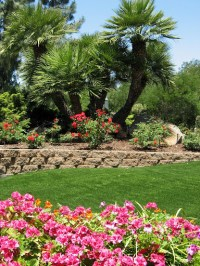 Retaining walls, Palm trees and Palms on Pinterest