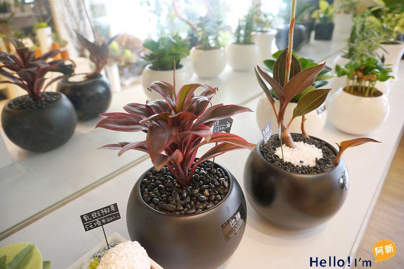 台南盆栽,日光夏蘭植物工房-2