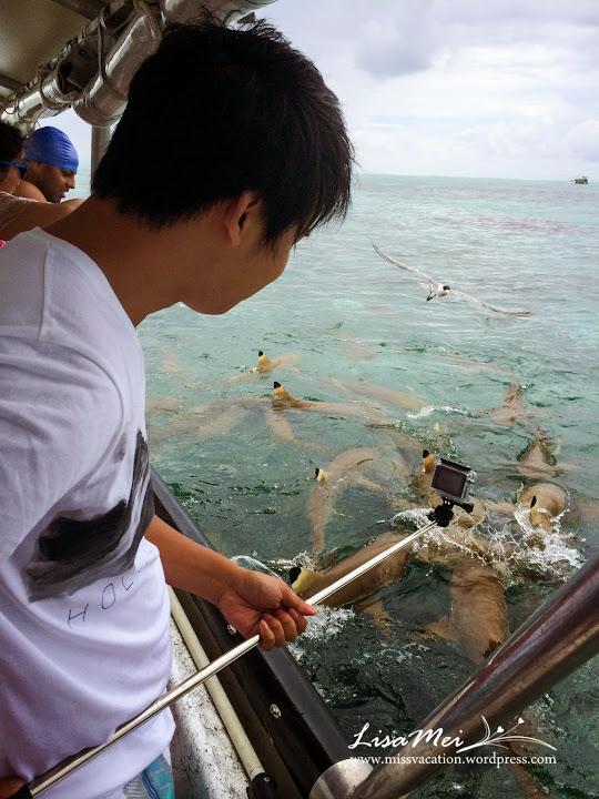 Bora Bora: Swimming With Sharks! (4/6)