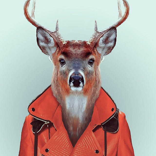 *Zoo Portraits動物時尚秀:正經八百時裝篇! 6