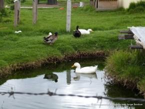 Lago con patos, Salitre Greco