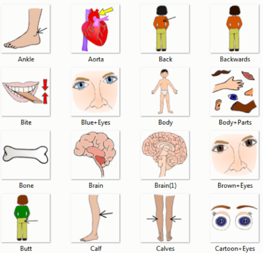 Human Body Parts Pictures with Names - Body Parts Vocabulary