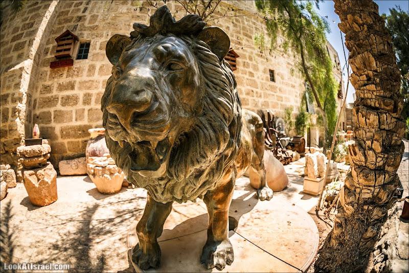Лев и крокодил иудейской пустыни
