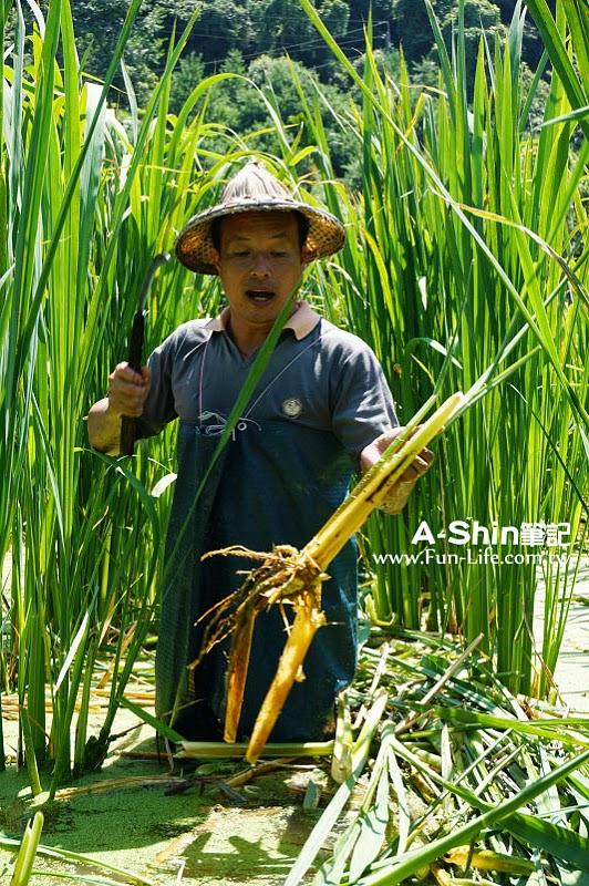 桃米休閒農業區14