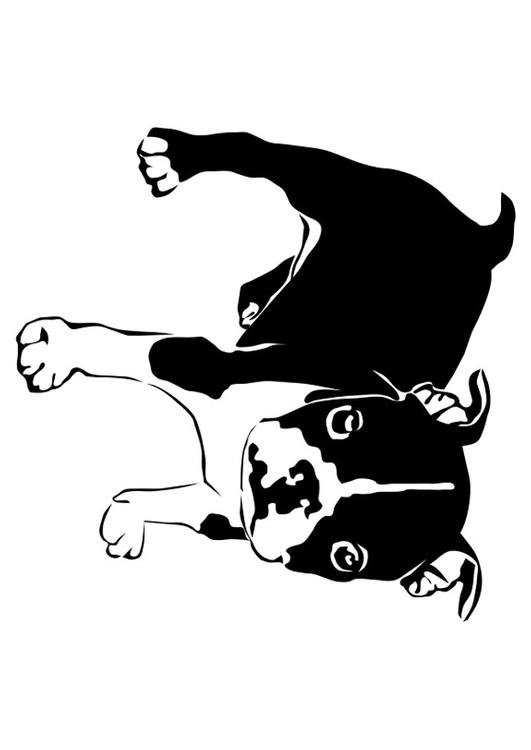 Bulldogge Malvorlage