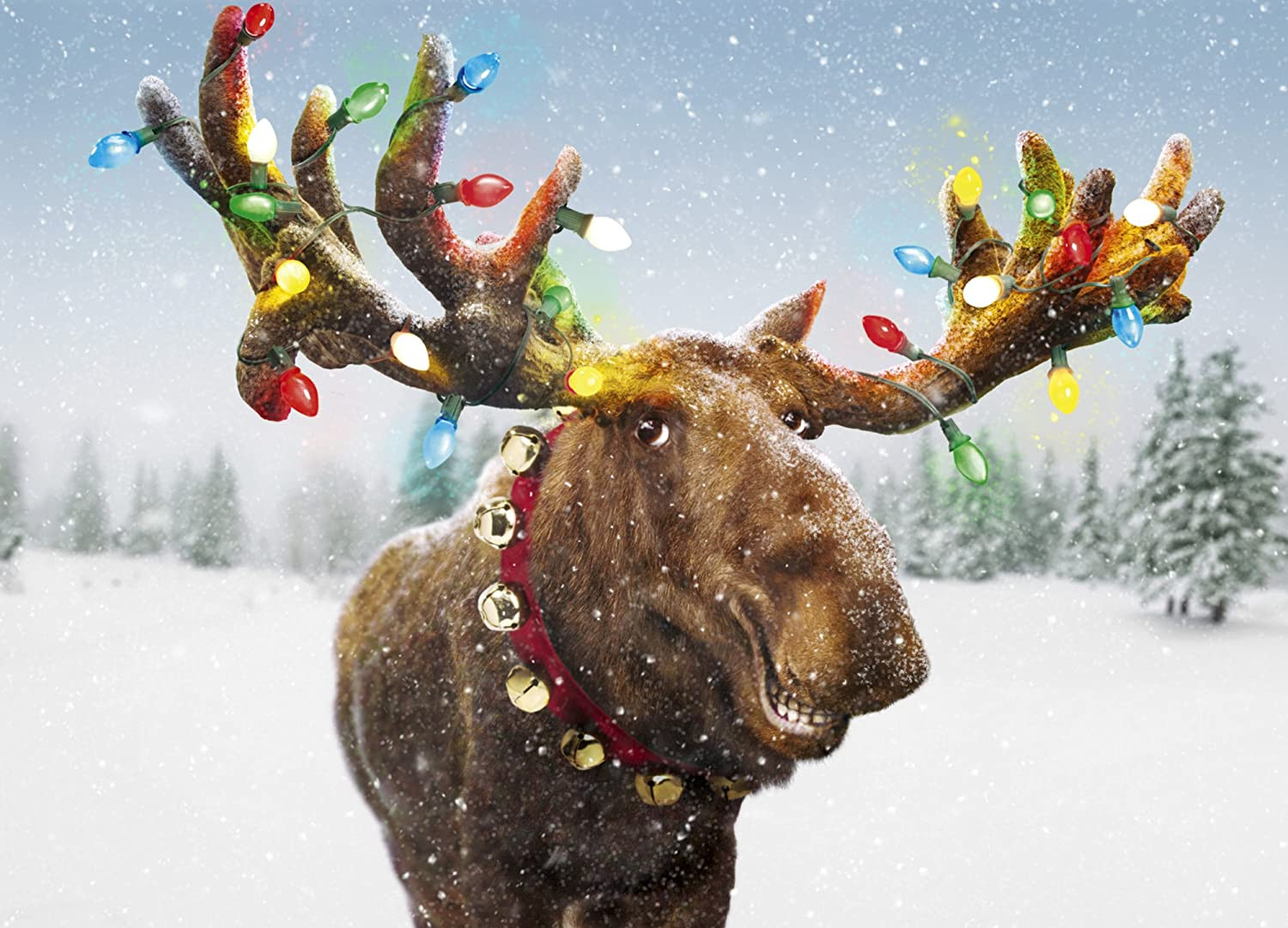 Wordlady Why Is The Plural Of Moose Not Meese