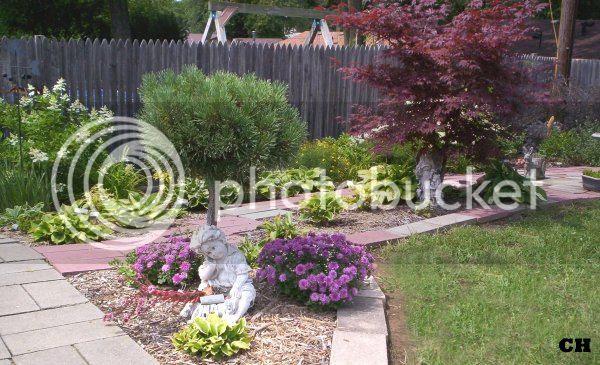 sunray gardens hydrangea hosta
