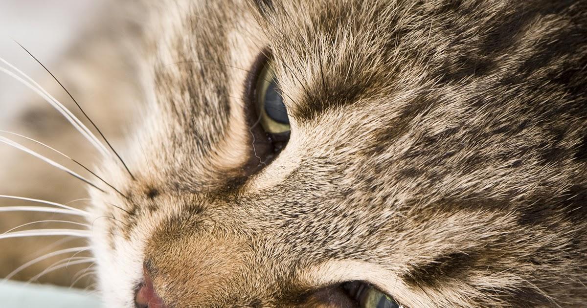 Carolina: Kittens Throwing Up Bile