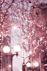 aesthetic rose pink fairy desktop