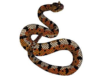 Schlange Zum Ausmalen - Vorlagen zum Ausmalen gratis