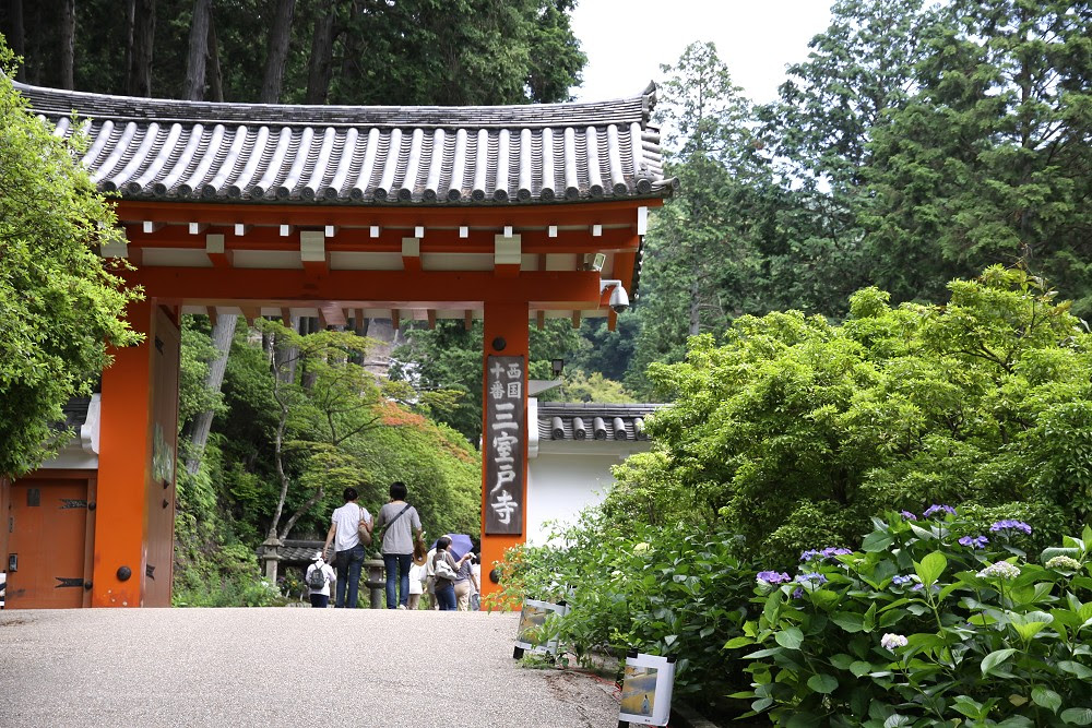 夏天的京都,從三室戶寺的紫陽花開始.... - 旅行途中