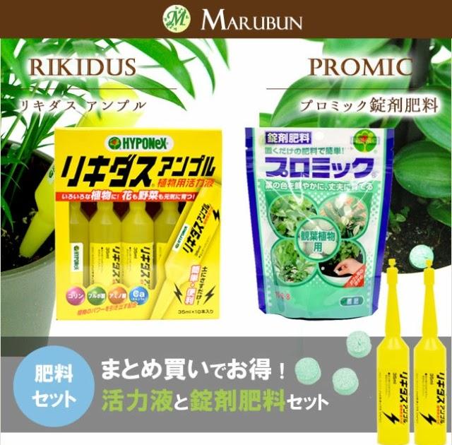壁紙無料花: 【最新】 観葉 植物 の 肥料