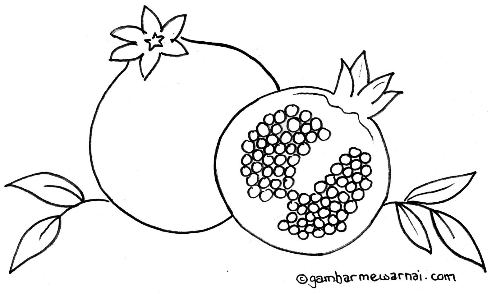 Sketsa mewarnai buah delima gambar mewarnai