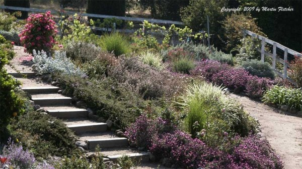 2 landscaping drought tolerant