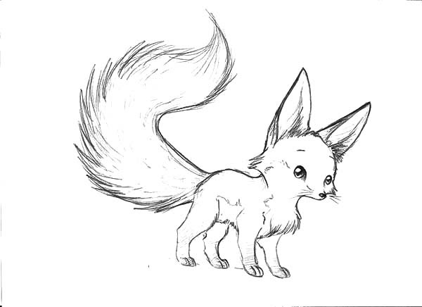 Long Tailed Desert Fox Coloring Pages NetArt