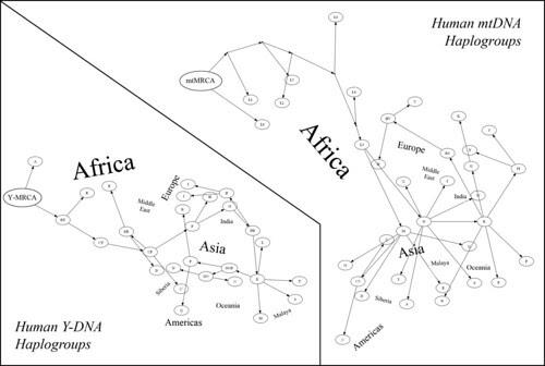 aminevuqy: human haplogroup map
