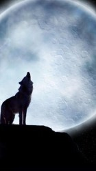 Lone Wolf Wallpaper Iphone WALLPAPER HD For Android