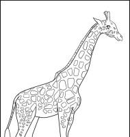 Malvorlage Giraffe Gratis