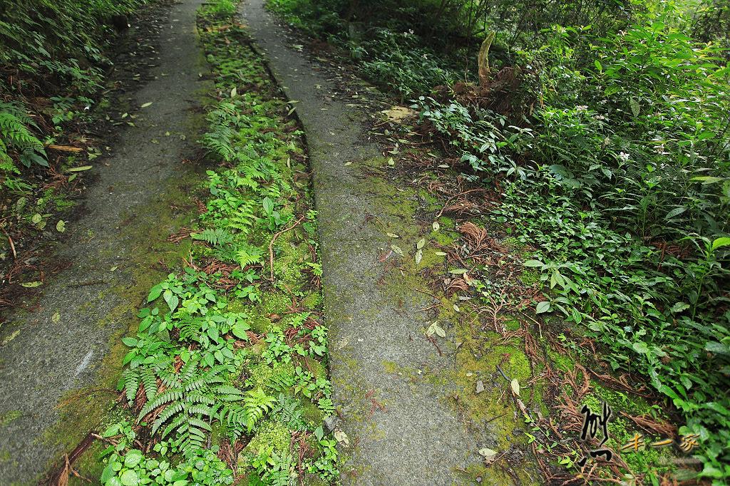 [嘉義奮起湖石棹景點] 龍雲休閒農場森林步道~鐵達尼石-五彩石 - 熊本一家の愛旅遊瘋攝影