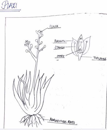 CLASSNOTES: Biology Notes For Class 11 Of Practical Centre