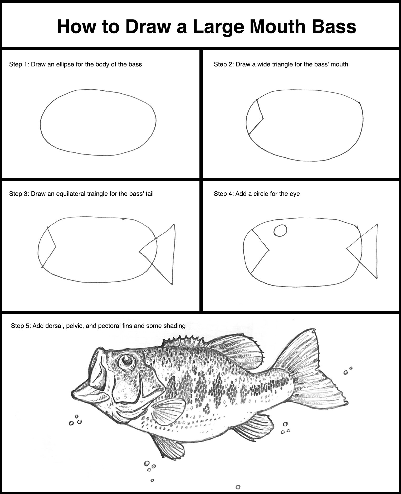 Bass Drawing Easy : drawing, Drawing, Skill:, Largemouth
