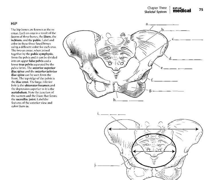 66 [FREE] KAPLAN COLORING BOOK ANATOMY PDF PRINTABLE PDF