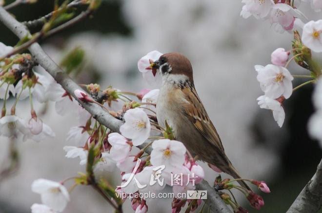 花の畫像について: 50+白蘭 花言葉
