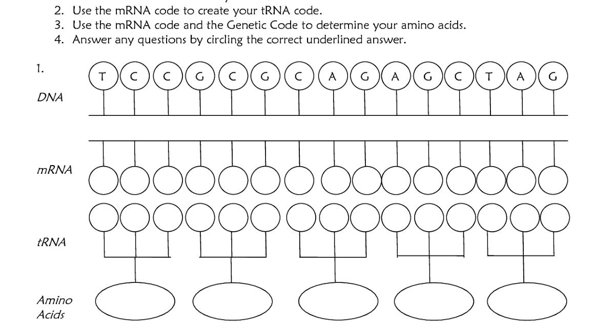 32 Dna Coloring Transcription And Translation Worksheet