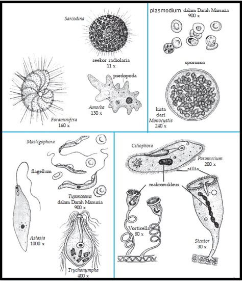 Soal Biologi Fungi Gonzaga