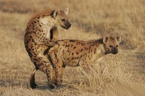 Informasi Menarik Fotofoto Binatang yang Tertangkap