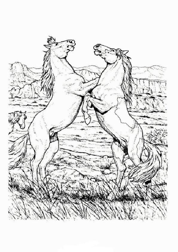 Malvorlagen Pferde Zum Ausdrucken Zum Ausdrucken