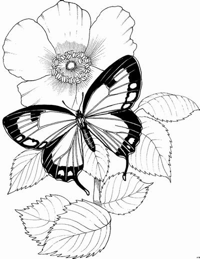 Malvorlage Schmetterling Blume - Kostenlose Malvorlagen Ideen