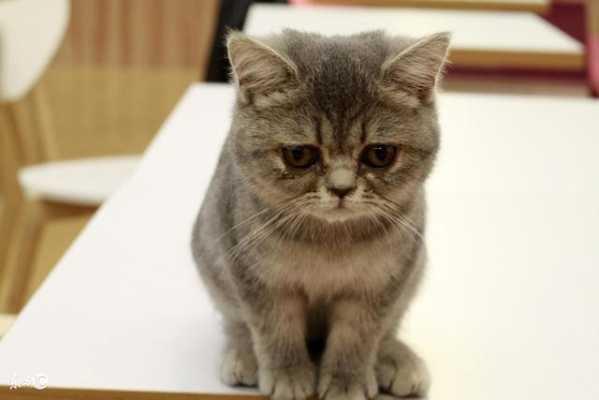 最高の引用: 50+素晴らしい貓 花色 公母