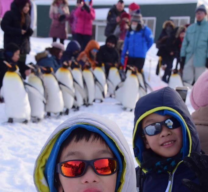 2018不自駕冬遊北海道(2) - 企鵝散步和寒帶動物大進擊 旭川市 旭山動物園 @ Hudson's Paradise