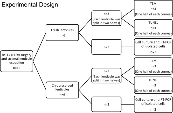 90 INFO EXPERIMENTAL RESEARCH DESIGN STAGES FLOW CHART PDF