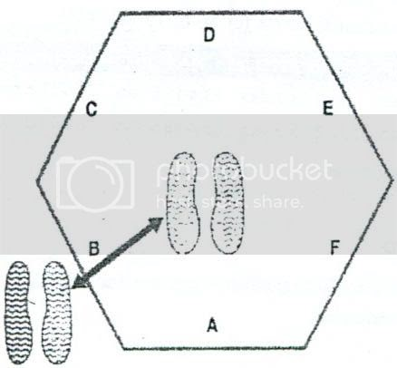 Complete Soccer Training: Hexagonal obstacle test