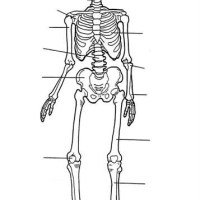 39 Menschlicher Körper Zum Ausmalen   Besten Bilder von ...