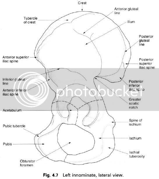 Complete Soccer Training: Pelvic girdle