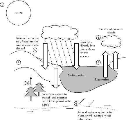 31 Water Carbon And Nitrogen Cycle Worksheet Answers