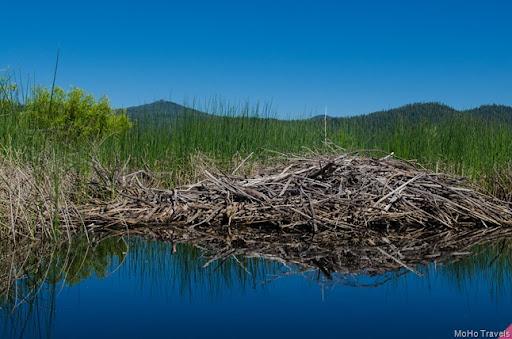several beaver dams along the way
