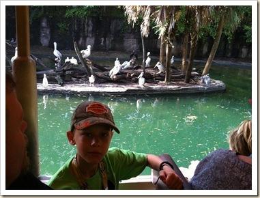 jb on safari