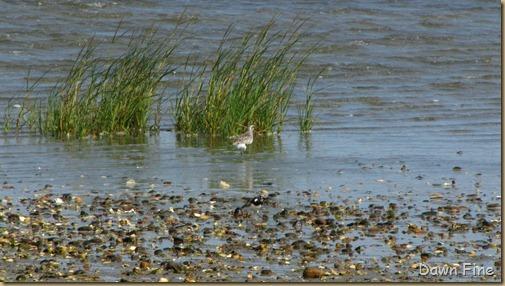 birding south beach_024